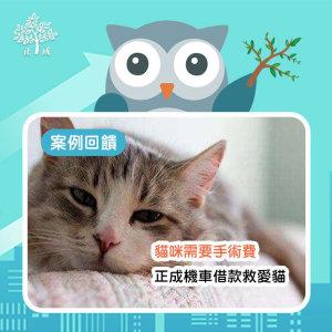 【案例回饋-大學新鮮人】貓咪需要手術怎麼辦?貓奴用機車典當救愛貓還能免留車